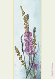Verbascum by Judy Ball